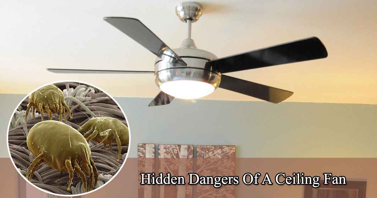 untitled 1 22.jpg - Les dangers cachés d'un ventilateur de plafond