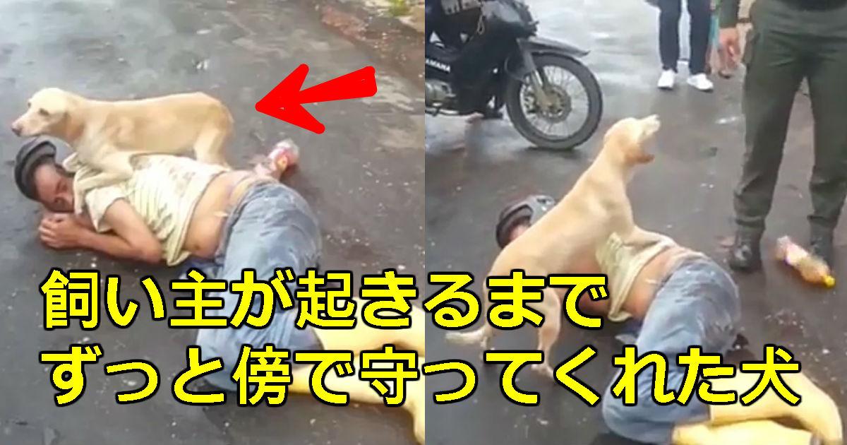 1 174.jpg - 酔っぱらって道で寝込んだ飼い主を見守る犬(映像)