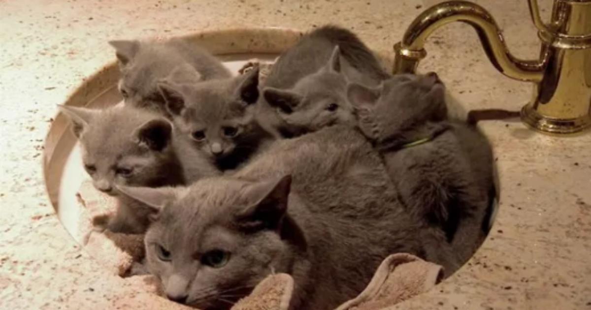 cat 3.png - 【癒し】色んな場所でくつろいで可愛すぎる猫まとめ