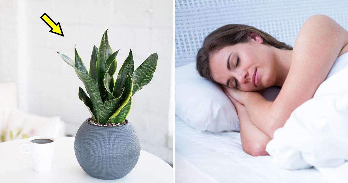 sleep 2.jpg - These 9 Bedroom Plants Can Help You Sleep Better Every Night