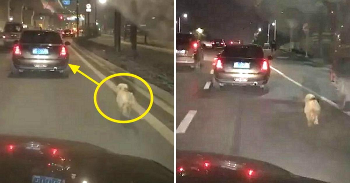 unnamed file 29.jpg - 捨てられたことを知らずに飼い主の車を追いかける子犬..