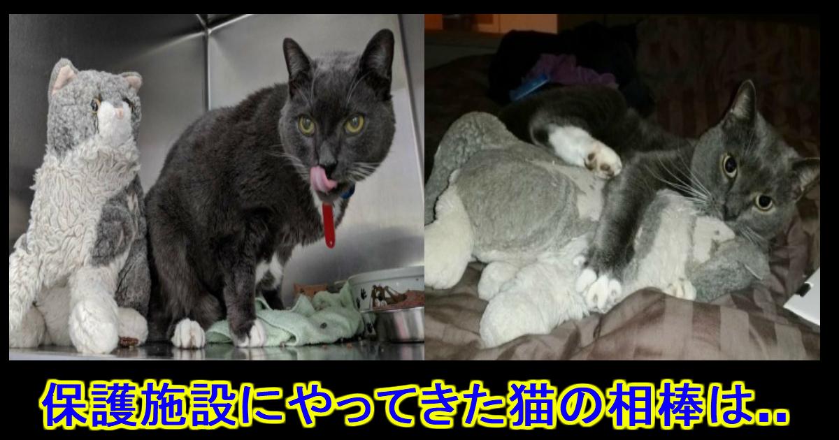 unnamed file 9.jpg - 亡くなった飼い主に貰った人形を抱きしめて...保護施設に来た一匹の猫。