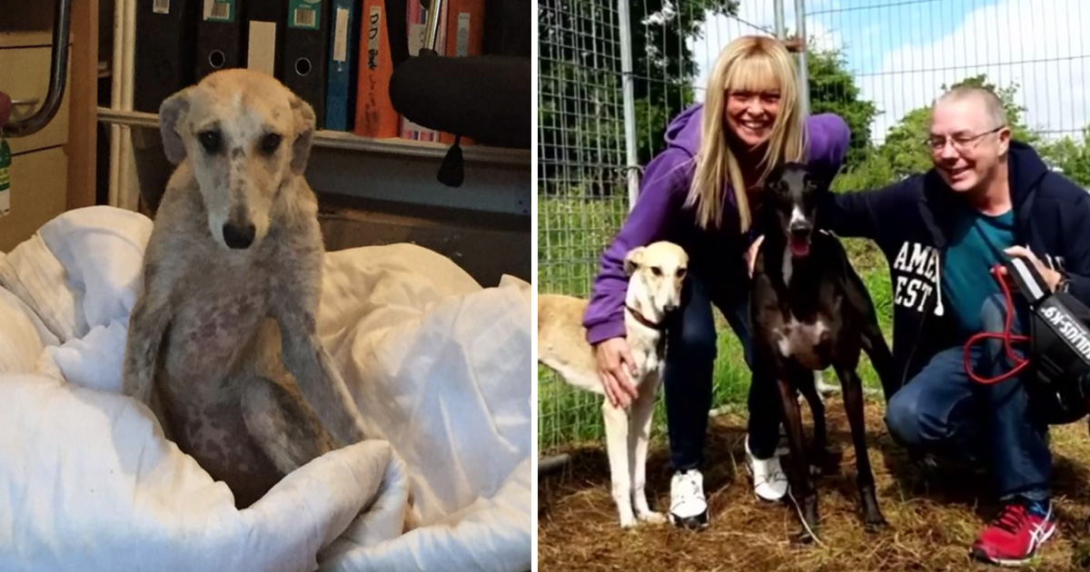 vdfd.jpg - Heartbreaking Moment Neglected Dog Was Scared To Look At Her Rescuers