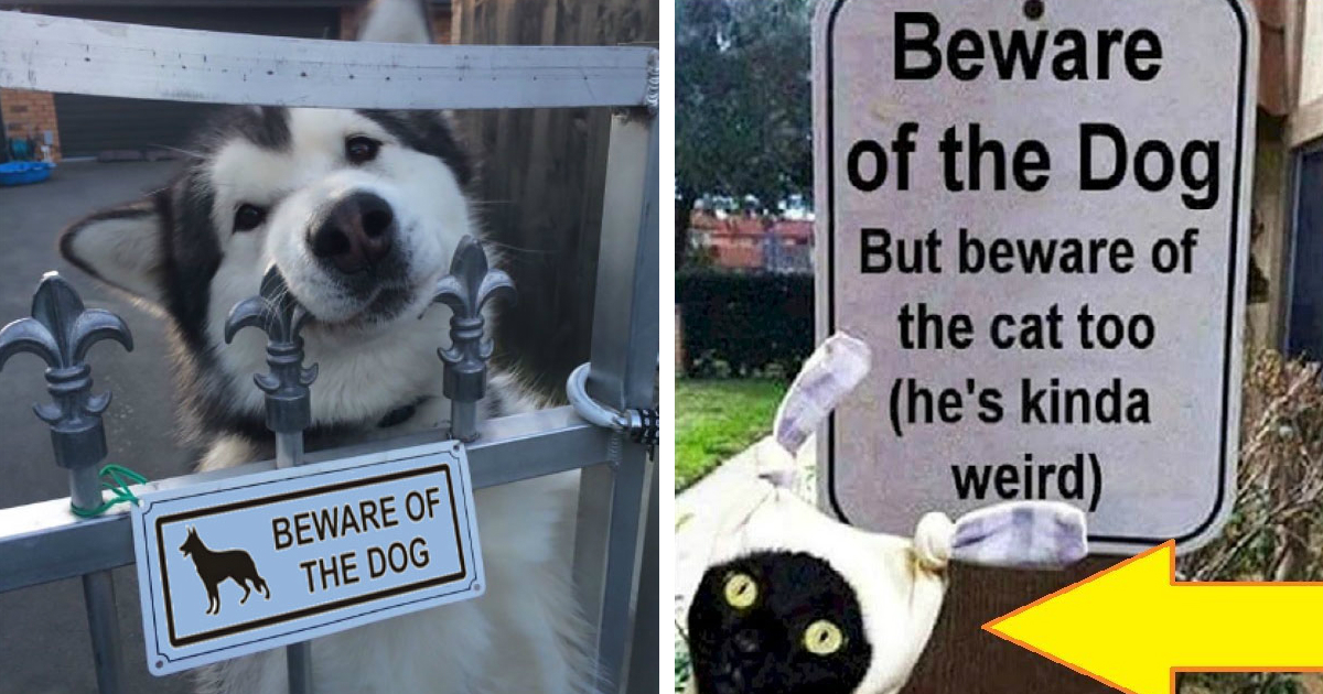 "beware of dogs.jpg - 10+ Dangerous Photos of ""Be Aware of Dogs"" Signs"