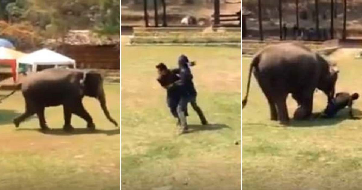 e3 side.jpg - Elephant Saw Her Caretaker 'Fighting' And Rushed To Save Him—She Even Stopped To Check If He's Okay