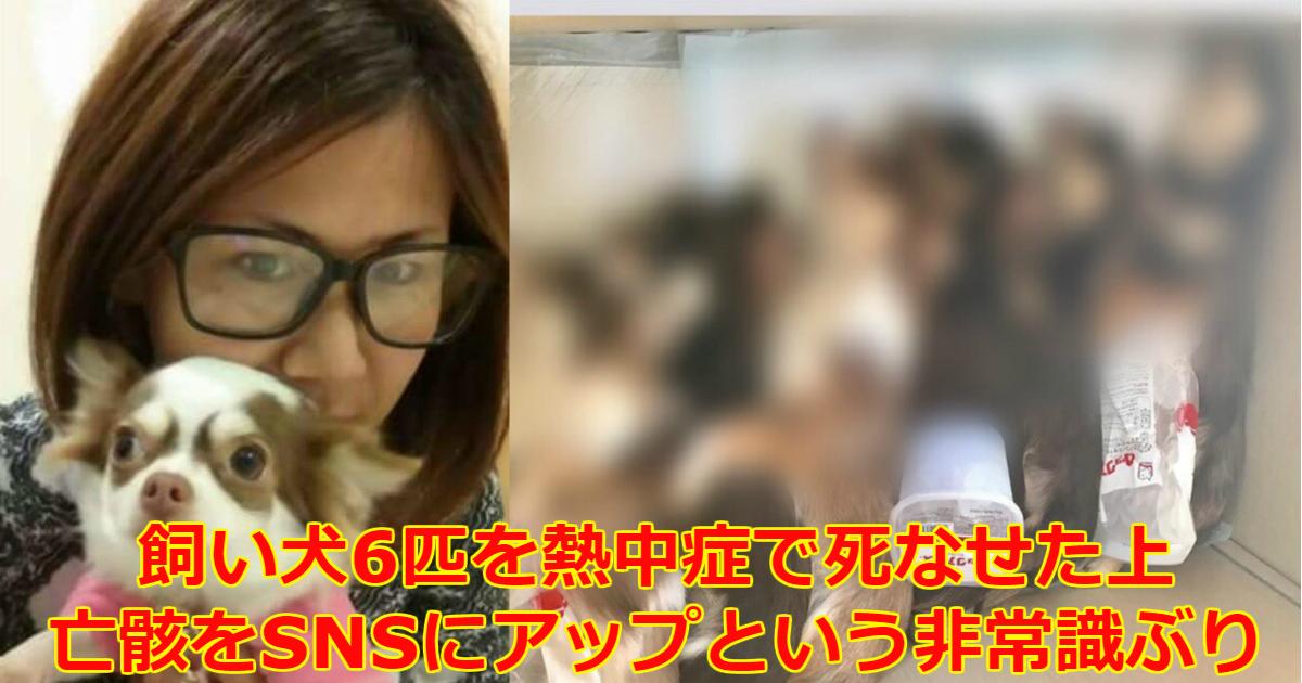 koyanagi.png - 【閲覧注意】「あなまろ家族」飼い主が熱中症死させたチワワ6匹をFacebookに上げ大炎上!