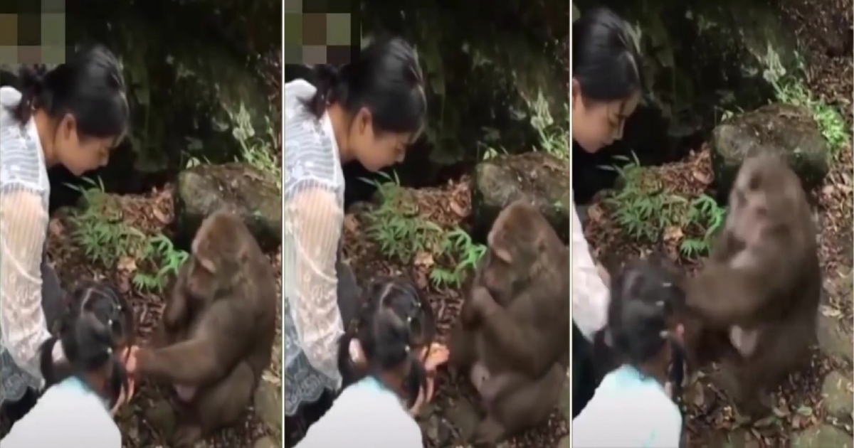 m 1.jpg - Little Girl Taunted Monkey With Food So He Retaliated By Punching Her In The Face