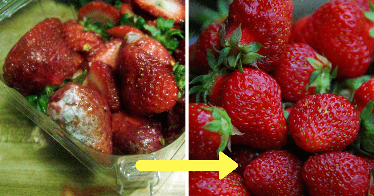 strawberries featured.png - Farmers Reveal Ultimate Secret To Keep Berries Fresh For Weeks