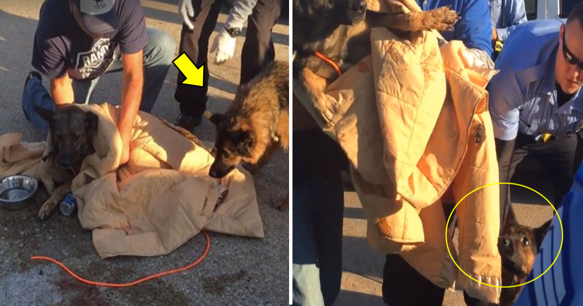 tata 5.jpg - Dog Paralyzed On The Ground Was Guarded By A Furry Friend Sitting By Her Side