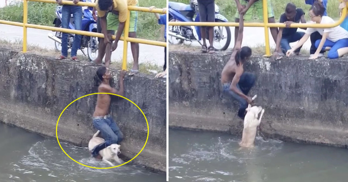 tata 6.jpg - Young Man Dangled Himself On The Safety Barrier To Save A Drowning Dog