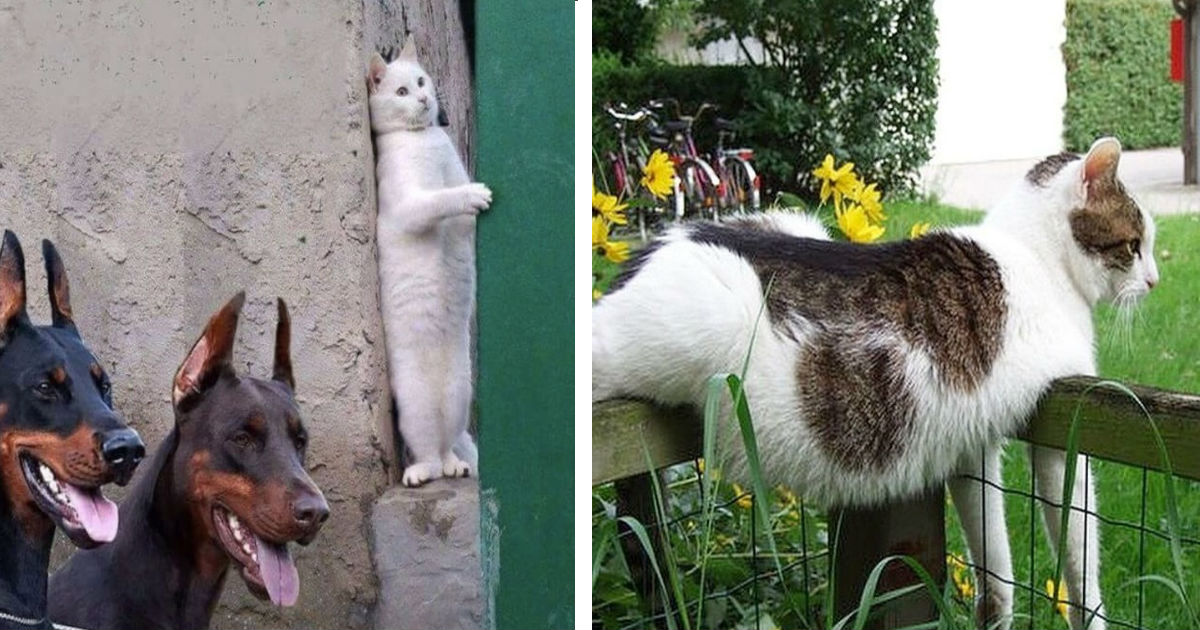 100 14.jpg - 31 Photos Proving That Cats Are Hilarious Creatures