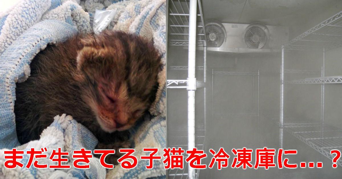 3 71.jpg - 治療費節約「生きている」子猫を生きたまま「冷凍庫」に入れた動物保護センターのスタッフ
