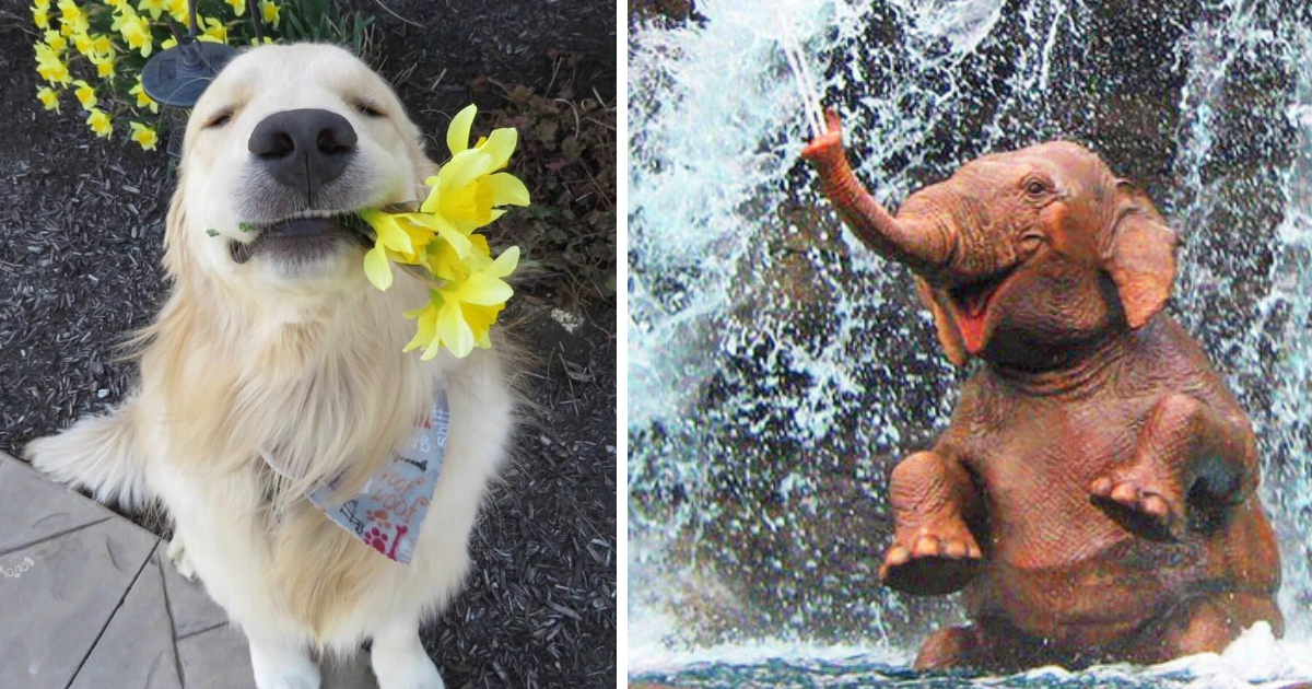 animal difficult day.jpg - 21 Photos That Can Make You Feel Better Even on a Very Difficult Day