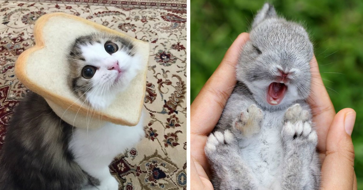 animals wont sad.jpg - 24 Photos That Could Convince the Most Anti-Pet Person to Get a Furry Friend