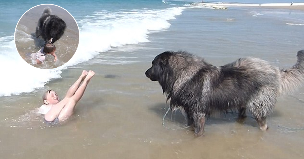 ggga.jpg - Adorable DogKept On Dragging A Little Girl Out Of The Sea ToSaveHer From TheWaves