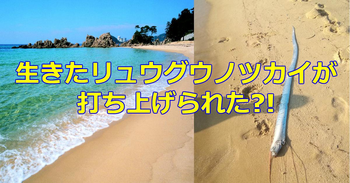 tukai.png - 福井県の海にリュウグウノツカイが目撃される!もしかして地震の予兆?