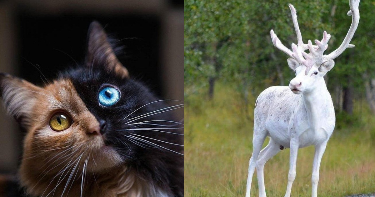 2 195.jpg - 23 Cool Animals You Can Meet Once in a Lifetime