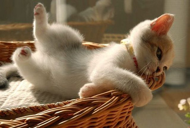 Little kitten rolling out of a basket