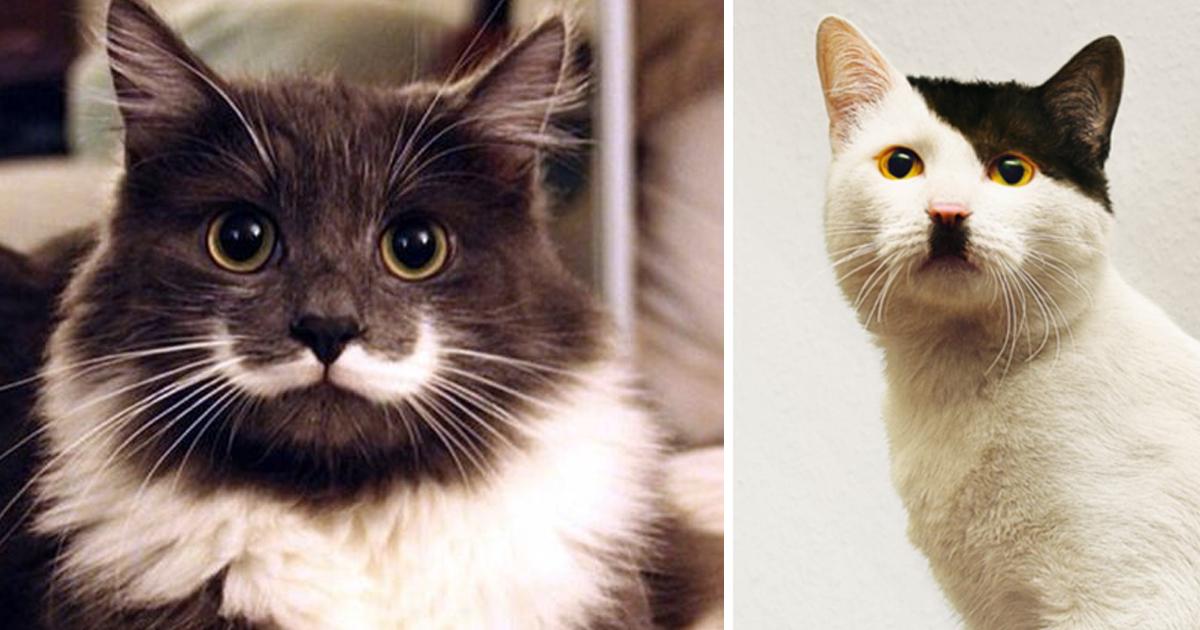 articulo3.jpg - 40 Gatos Con Un Pelaje Como El Que Nunca Has Visto Antes