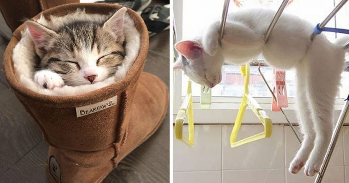 articulo4.jpg - 23 Gatitos Que Saben Muy Bien Lo Que Es Dormir