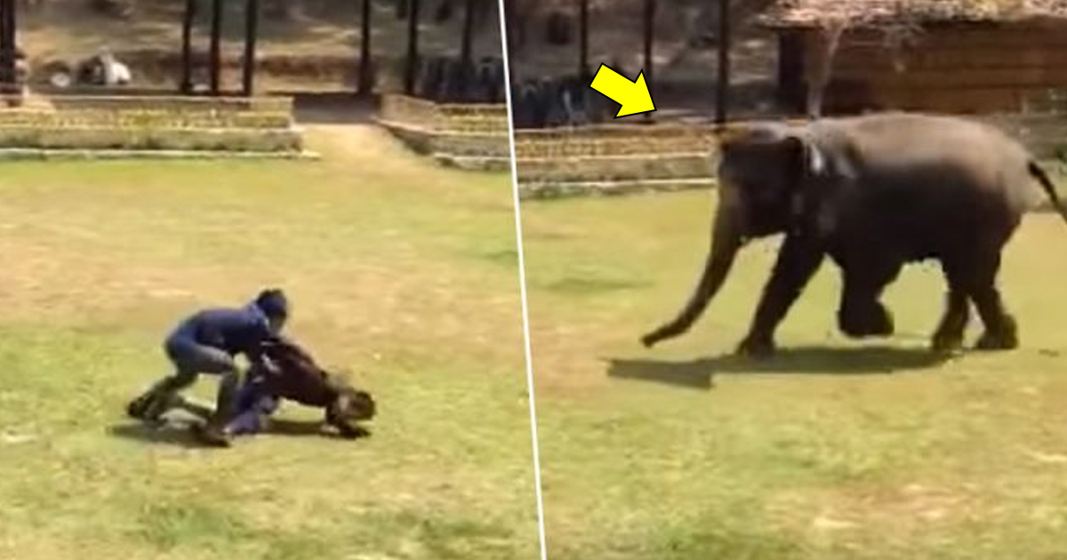 bbbs.jpg - Elephant Rushed To Save Her Caretaker When He Was 'chased' By Someone
