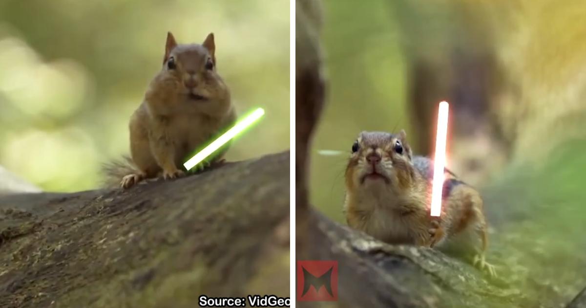 capaff.png - Montagem hilária coloca esquilos para duelarem com sabres de luz