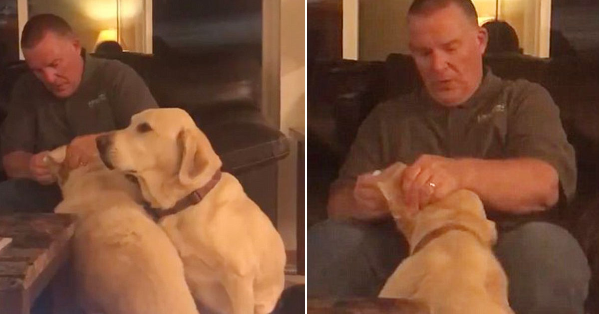 dog 13.jpg - Owner Pretends To Give His Dog Ear Medicine To Prevent Jealousy As The Other Dog Needs It For An Infection