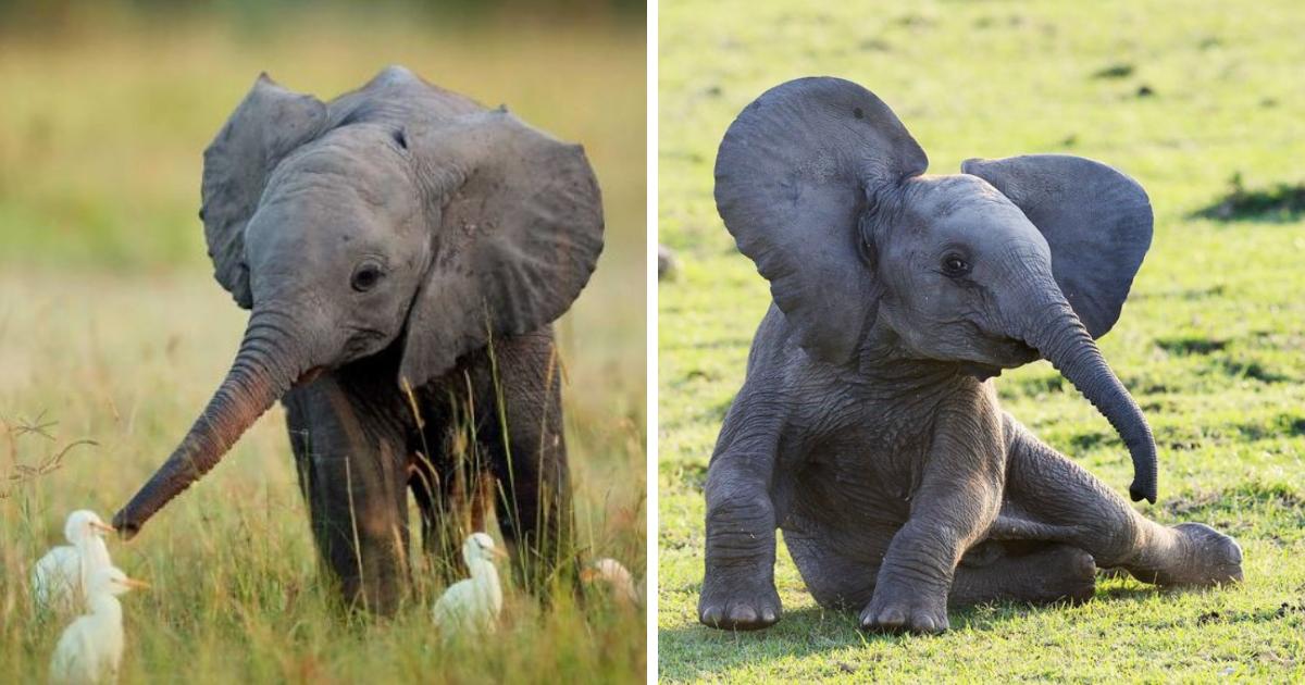 elephants.png - 10+ fotos de bebês elefantes adoráveis que farão o seu dia