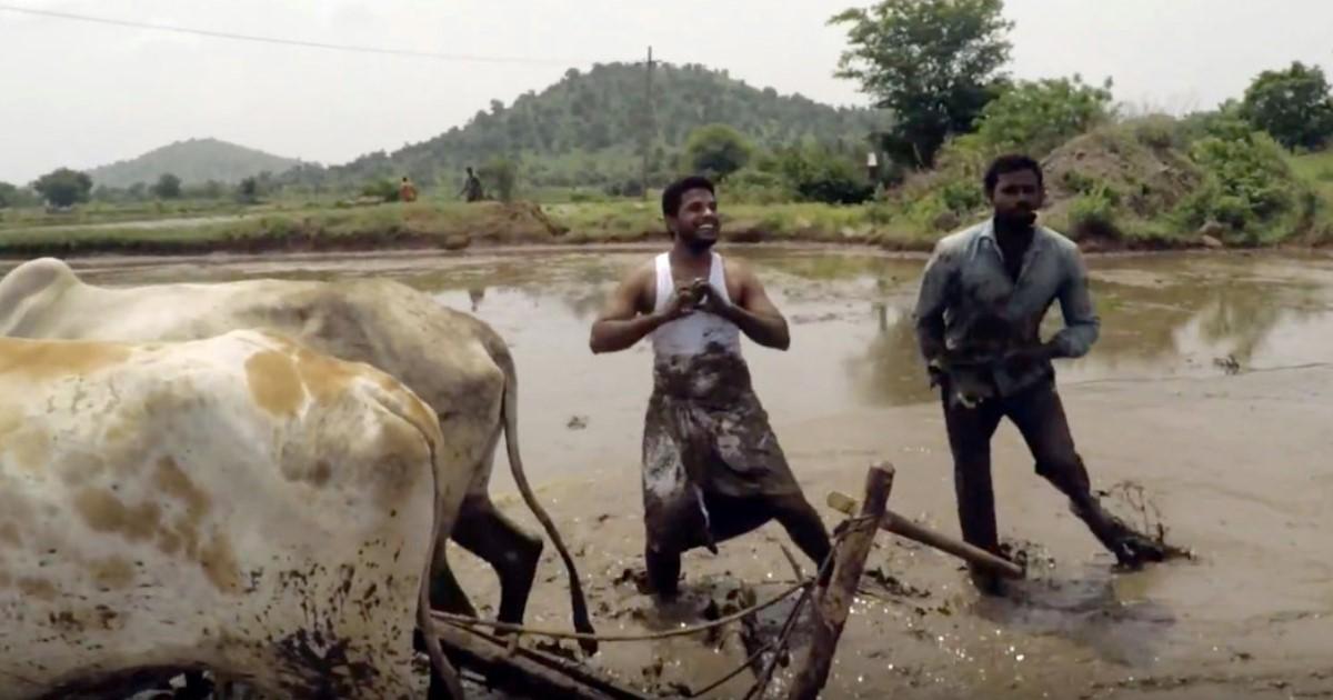 featured image 10.jpg - Dois fazendeiros indianos realizam desafio de maneira hilária em meio à bois e lamaçal