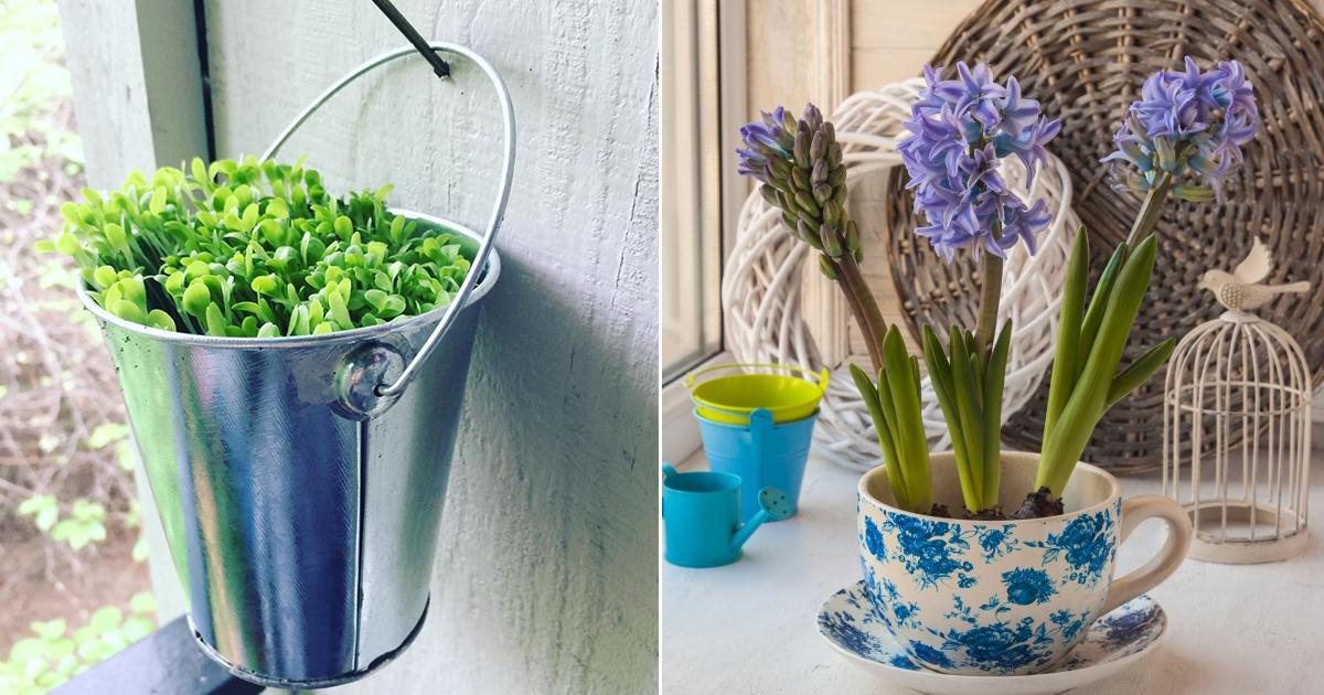 planta.jpg - 18 Maneras de hacer un jardín en tu casa