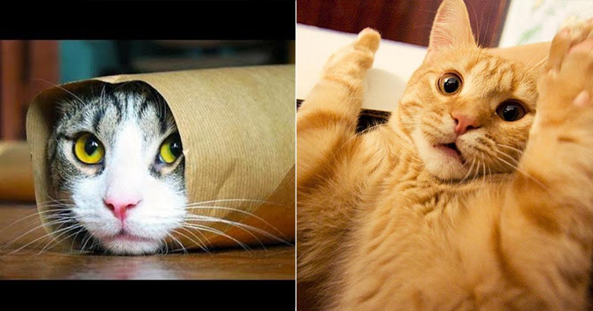port 1.jpg - 23 Gatos que le enseñarán al mundo sus reglas de vida