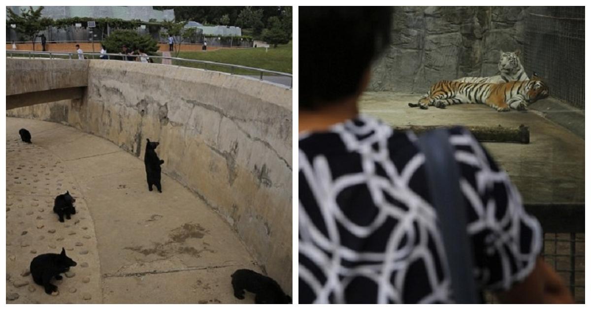 zoo.jpg - Cena perturbadora em um zoológico da Coréia do Norte
