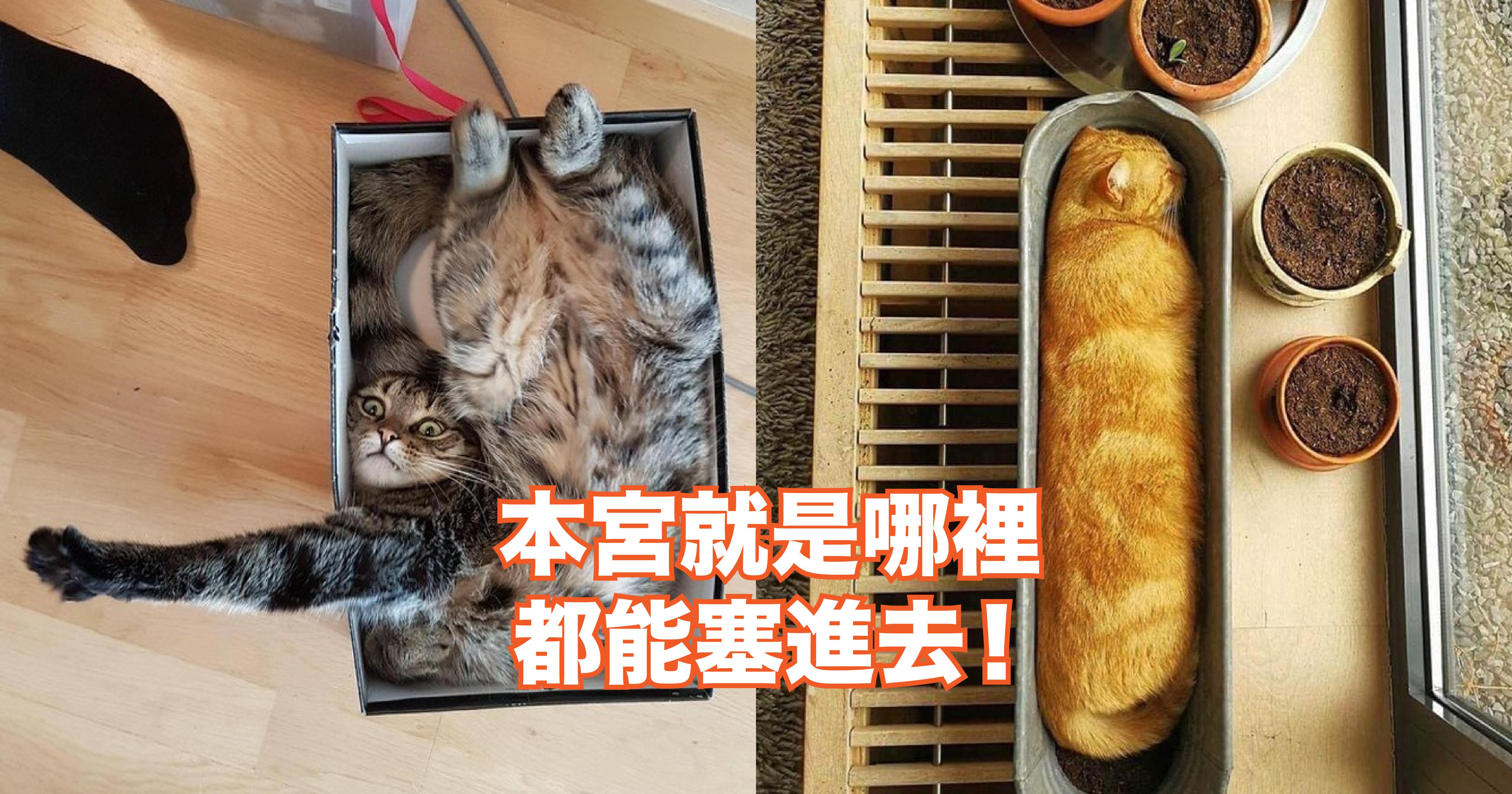 0.png - 【超療癒貓咪圖輯】再度驗證「喵喵」沒有骨頭這回事...牠們真的哪裡都能塞進去!
