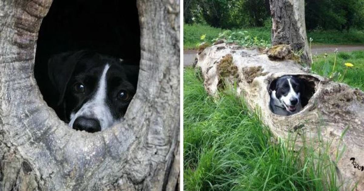 26 2.jpg - 20 Hilarious Responses From 'We Rate Dogs' After People Failed to Send Dog Photos