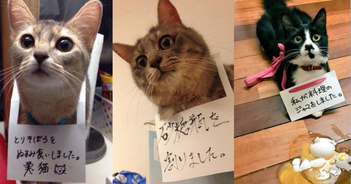 5 4.jpg - 「ごめんにゃさい・・・」にゃんこたちの反省文つき写真が可愛すぎてキュン死♡