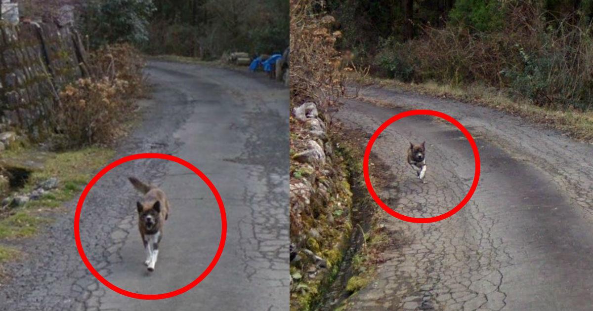 5 60.jpg - 「捨てられた」ことを知らずに連れていってほしいと飼い主を追いかける犬