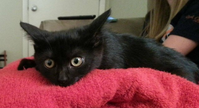Black kitten rescued on Friday the 13th