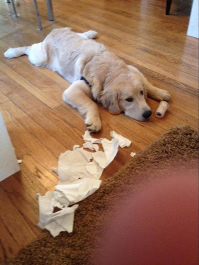Just 18 Dogs Who Were Definitely Not Doing Anything Wrong, Okay