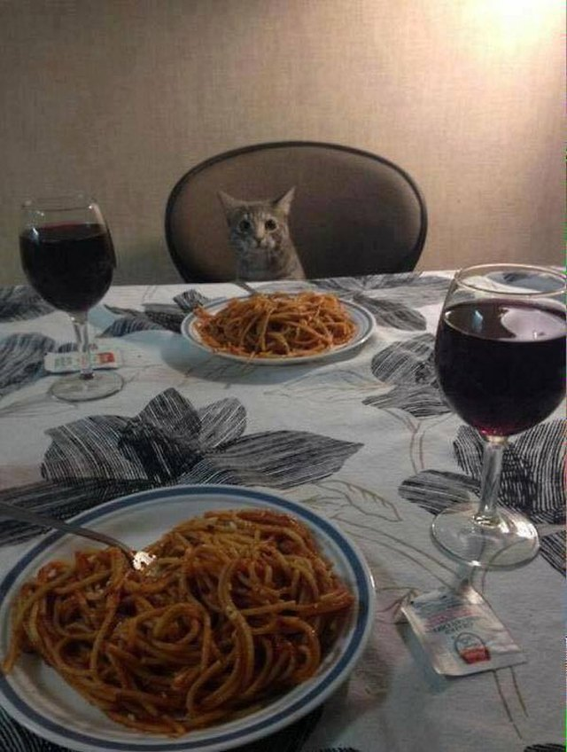 Cat sitting at the dinner table