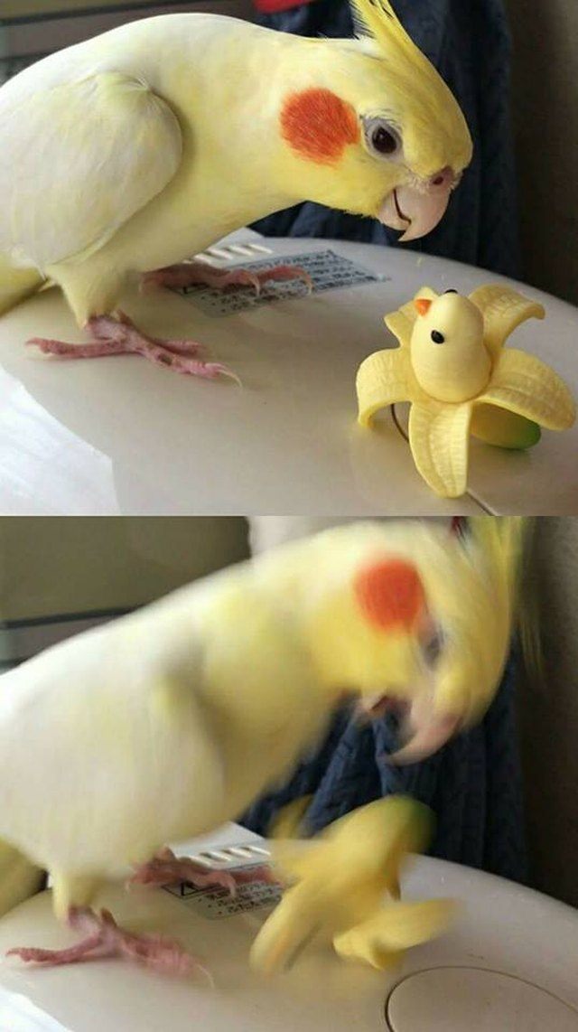 Bird attacking a banana dressed up like the bird