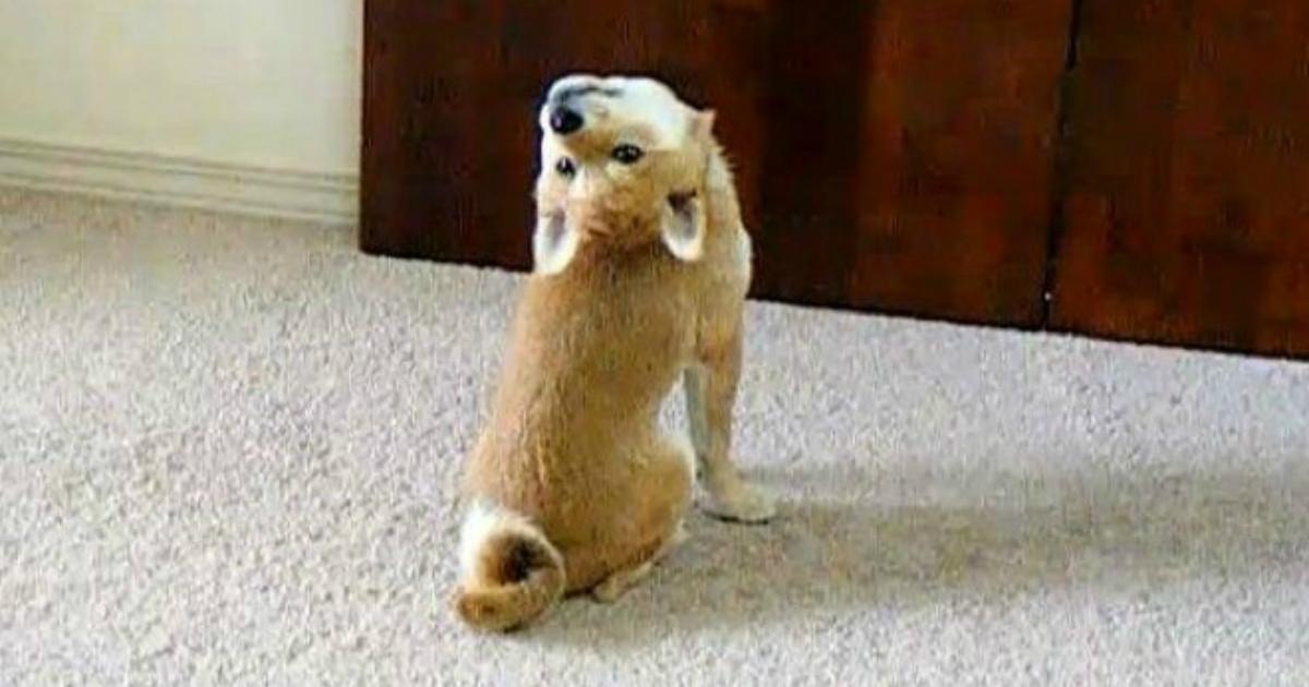 6 2.jpg - 15+ Hilarious Photos Proving That Our Pets Are Adorable Weirdos
