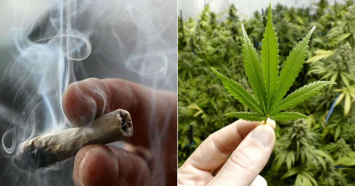 cannabis5.jpg - Studies Show Smoking Cannabis May Increase Your Risk Of Stroke As It Cuts Off Blood Supply To Brain