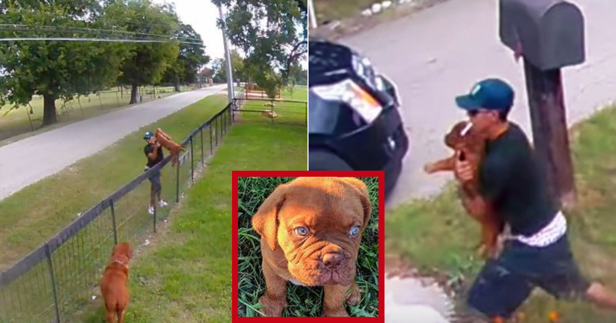 chipper5.png - 10-Weeks-Old Puppy Returned To Owners After Footage Of Thievery Went Viral