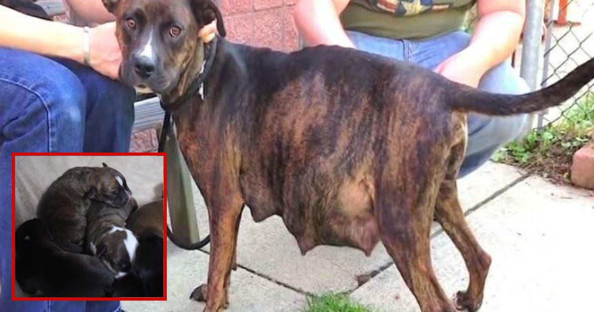 doggies 1.png - Cadela grávida se recusa a dar à luz - depois de olhar para o ultrassom, o veterinário entende o porquê