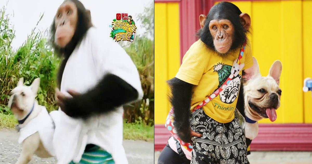 e69ab4e58a9b.jpg - 仲の良さで人気のチンパンジーと子犬。 その裏には...