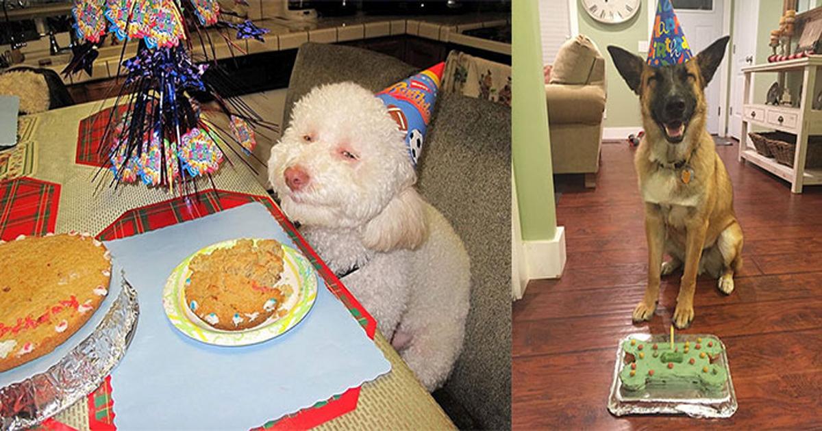 ec839decb695.jpg - '세젤귀' 동물들의 귀여운 '생일파티' 사진 모음. jpg