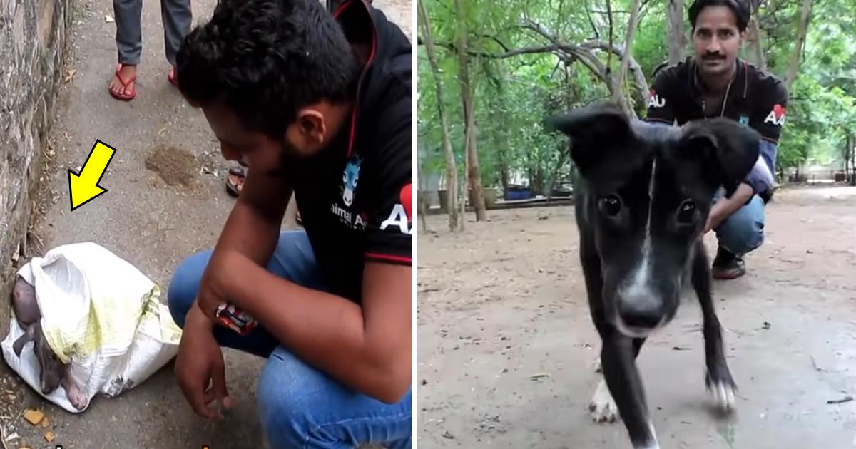 ggsa.jpg - Transformação incrível um cão de rua encontrado dentro de um saco por voluntários de resgate aos animais