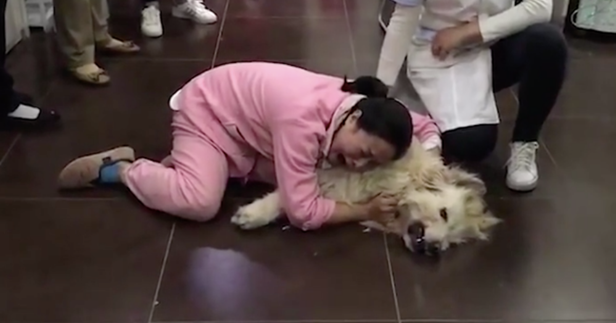 y2 2.png - Grief-Striken Woman Cries Over The Body of Her Furry Dog Who Was Poisoned After They Shifted From California to China