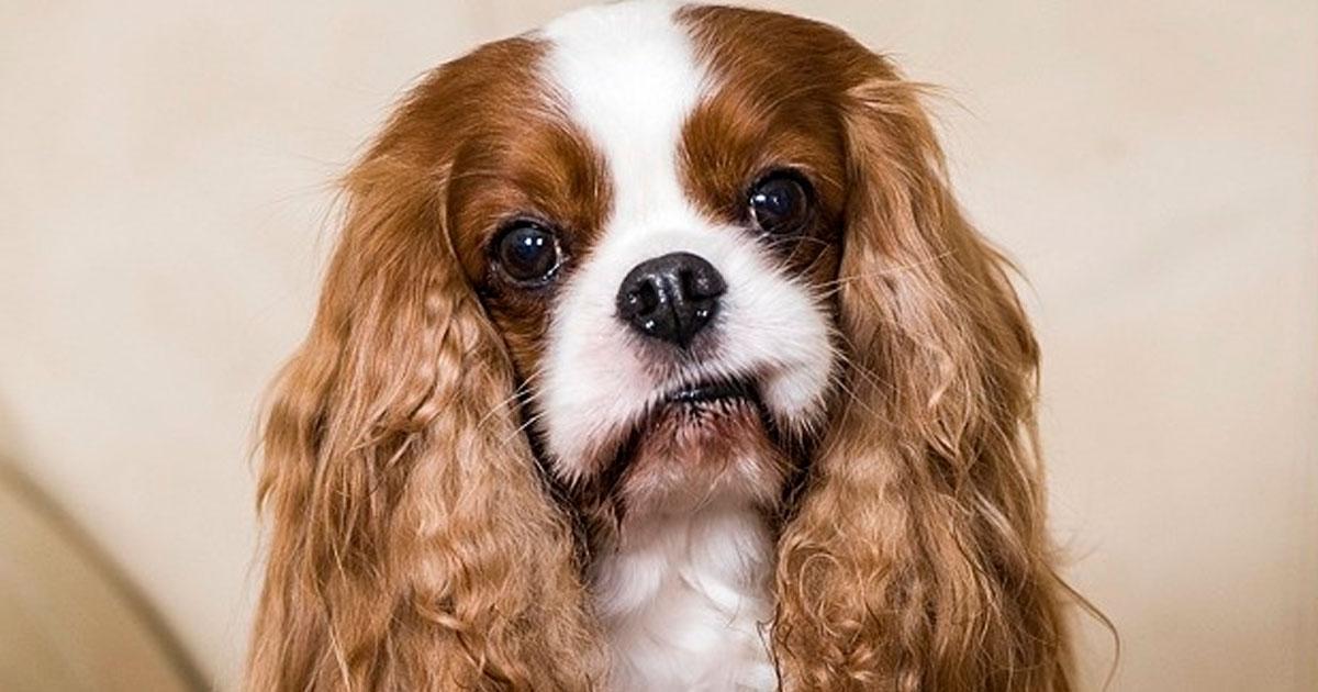 1 22.jpg - 19 Perros que cuestan una fortuna