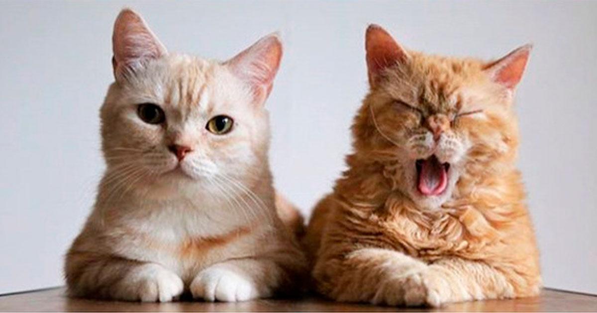 1 357.jpg - 20 Gatos que aprovechan su minuto de fama al máximo